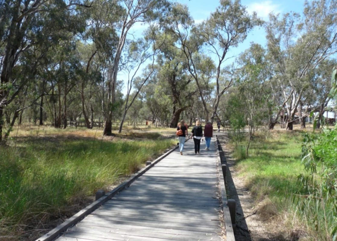 Banyule Forest